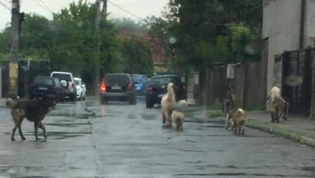 """. Inundațiile dincolo de breaking news. """"Am văzut pe GPS cum mașina mi-a ajuns în râu"""""""